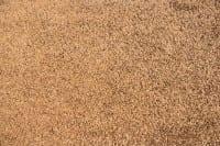 Vorschau: Satino Romeo 44 ITC - Teppichboden Hochflor